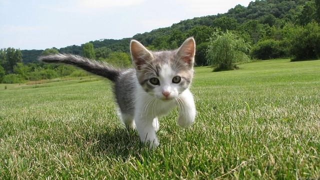 e837b5092efd023ecd0b470de7444e90fe76e6d21eb817439cf7c9_640_baby-kitten